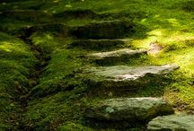 green means grow / by Jillian Christopher