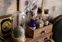 Cabinet & Curiosities - Specimens / Natural history and so much more..