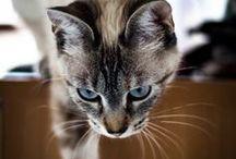 Beautiful Cat's
