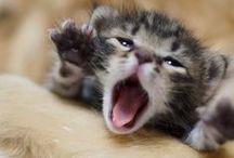 gatti gattini