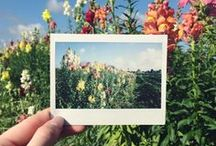 Polaroid! / Both cameras and photos!