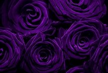 Black & Purple / by Momo