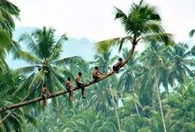 Tropic / Travel to the tropics