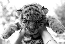 Little Big Creatures