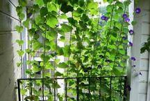 DIY Balcony & Gardening