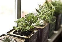 Plantitas / Mais verde, por favor.