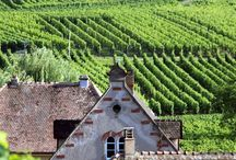 Wine routh Alsace France