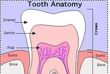 Dental Health / Oral Health