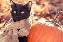 Jesień / Pory roku