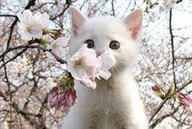 Wiosna / Pory roku