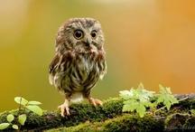 Animals : : Owls