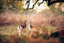 Animals : : Deers
