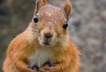 Animals : : Squirrels