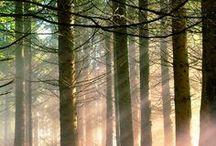 Landscape : : Forest