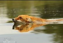 FOXES / FOX is a best animal ever