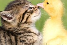 Furry & Feathered Friends