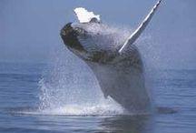 Love Our Marine Life / Local Marine Life
