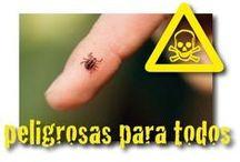 ANTIPARASITARIOS / Disponemos de lo antiparasitarios más actuales para prevenir la infestación de parásitos en tus mascotas y en tu hogar.