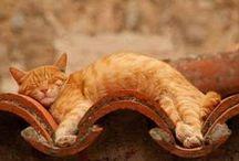 Cat Catalogue / Favourite felines