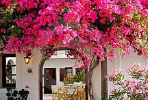 Home Decor & Gardening