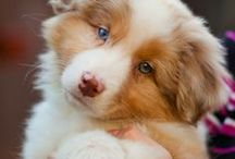 I wanna dog!