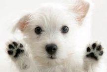 Dogs and Cats / Hermosa galeria de fotos de perros y gatos