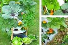 gardening green / organic gardening ideas for a healthier planet and a healthier you!