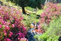 Naturist Excursions