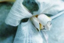 My pics of Flowers & trees