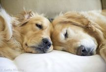 I love dogs / Animals
