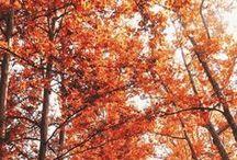 A u t u m n⠀L e a v e s . / Our love is like a withered leaf on the autumn.