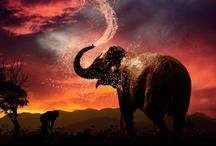 Elephants / by Stephanie Wright