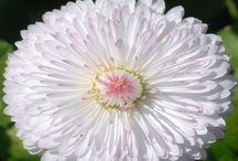 Gardens & Flowers / by Waneeta Loomis