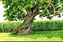 Tree / by Jennifer Martin