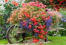 Planting hanging baskets, living wreaths and flower pots  / Container Gardening / by Michell De Leon Tyler