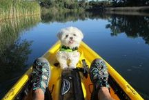 Pets on Vacation / Travelling with your dog, cat or other family pet?  We love furry friends at AAA Travel and know how including them in vacation plans can be a challenge.  Pet friendly destinations are easy to find when you know where to look like we do.   / by AAA