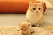 kitties  / Cats make everything better