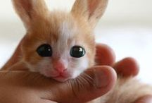 Random Animal Cuteness / ALL animals can be cute, don't you agree?