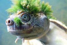 tortoise, tortue, tortuga, turtle de terre / tout sur la tortue de terre