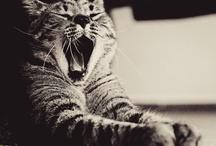 Dio fece il gatto perché l'uomo potesse avere il piacere di coccolare la tigre. Robertson Davies