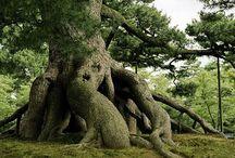 Bomen en bossen / Bijzondere bomen en mooie bossen / by Jos
