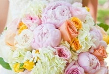 Bouquets / Several stunning wedding bouquets