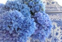 PALE PERIWINKLE and CORNFOWER BLUE