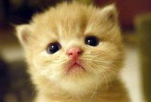 Amaris board / eat,sleep and look at kittens