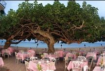 Hau Tree Lanai / The Hau Tree Lanai is the favorite beachfront restaurant for visitors and long-time residents alike. 