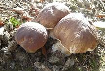Terra Morchellarum : Champignons - Mushrooms  / Photographies de champignons et de la nature environnante ! Pictures of mushrooms and the surrounding nature!