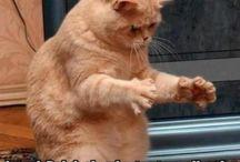 Funny Kitties / Humorous cat pins