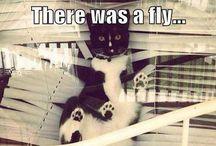 Cats vs. Blinds