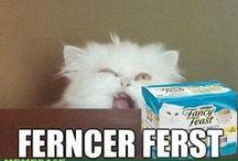 Ermahgerd Cat