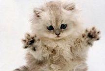 Cats, my love <3